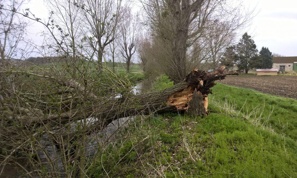 Les arbres tombés dans le ru sont dégagés