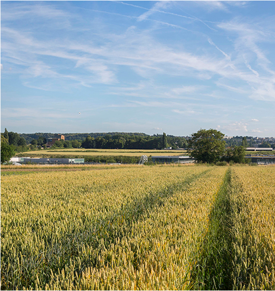 Située dans un vallon naturel, l'usine affiche une hauteur maximale de 11 mètres.